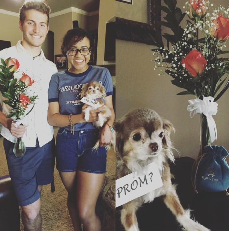 The Pressure Is On For Perfect Promposals The Pulse